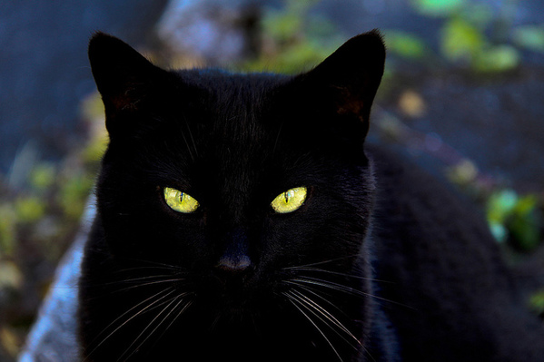 16 Surprising Superstitions from Around the World | RealClear